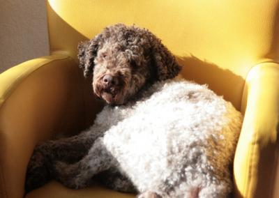 Mein treuster Besucher, mein Hund Bene