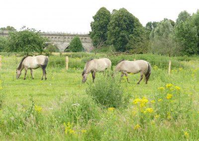 Pferde in der Steveraue